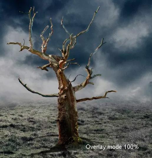 Иллюстрация дерева с лунами 28