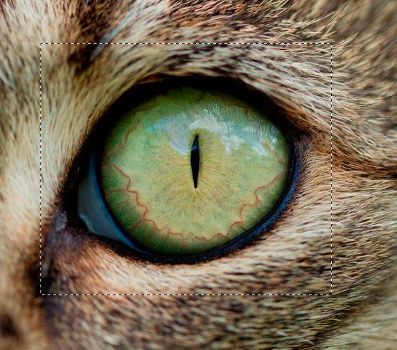 Завораживающий кошачий взгляд