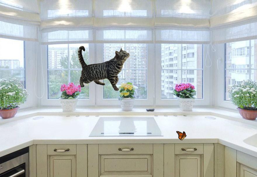 уменьшили кота в фотошопе