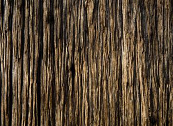 Большая деревянная текстура 1