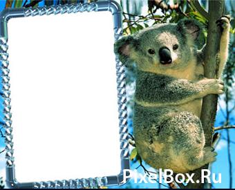 Рамка для фотографии - С коалой 1