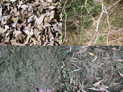 Текстура с деревьями и травами 1
