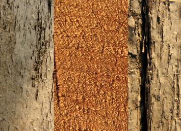 Набор деревянных текстур 1