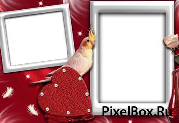 Рамка для фотографии - С попугаем 1