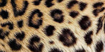 Текстура мех леопарда