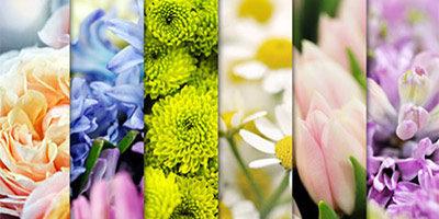 6 высококачественных цветочных фонов