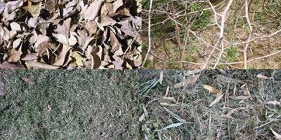 Текстура с деревьями и травами