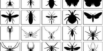 20 фигур жучков и паучков