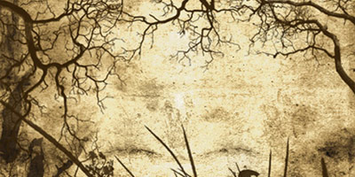 Кисти листва и ветки деревьев