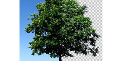 Видеоурок - Как вырезать дерево в фотошопе