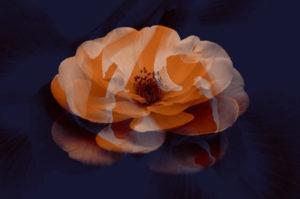Набор кистей «Реалистичные цветы»
