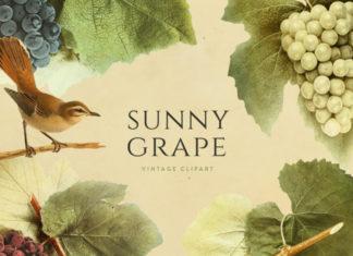 Винтажный клипарт «Солнечный виноград»