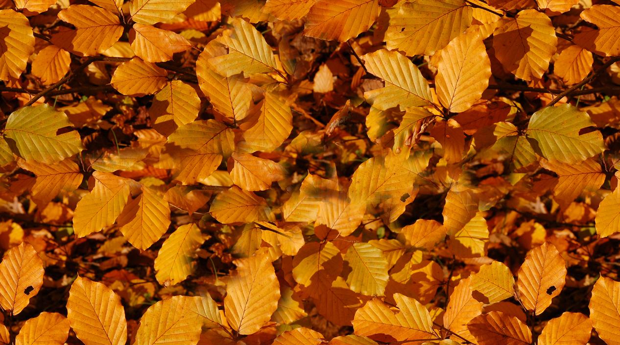 Набор текстур «Осенний листопад»