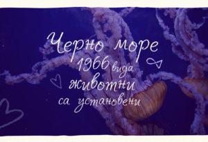 Шрифт Solena Кириллица