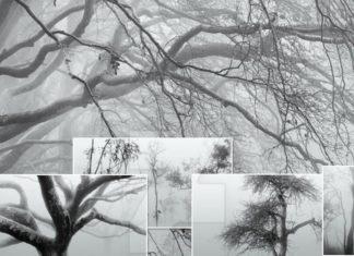 Набор кистей «Деревья в тумане»