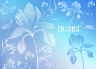 Набор кистей «Ирис»