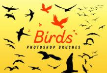Набор кистей «Птицы в полете»