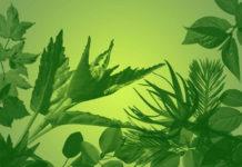 129 кистей листьев для Photoshop