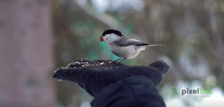 Футажи на тему Птицы