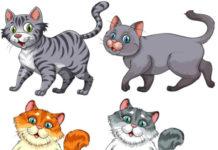 Коллекции клипарта с котами